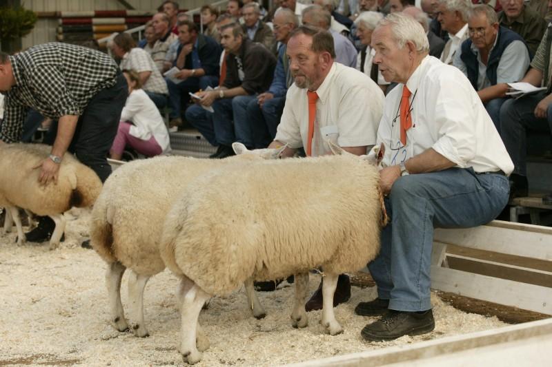 rotkreupelnl  schapen en geiten