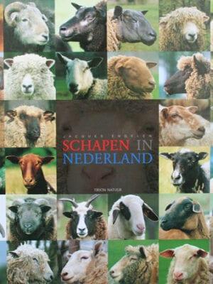 Schapen in Nederland