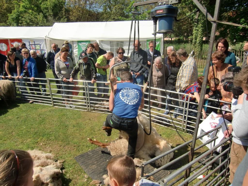 Vlaamse burgers bezoeken schapendag • Het Schaap