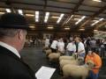 Hampshire Down Dag van het Schaap 197