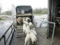 Nieuwe transportregels voor extreem weer